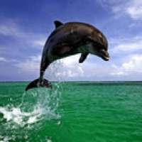 Пазл с дельфинами