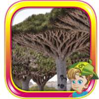 Escape From Socotra Island